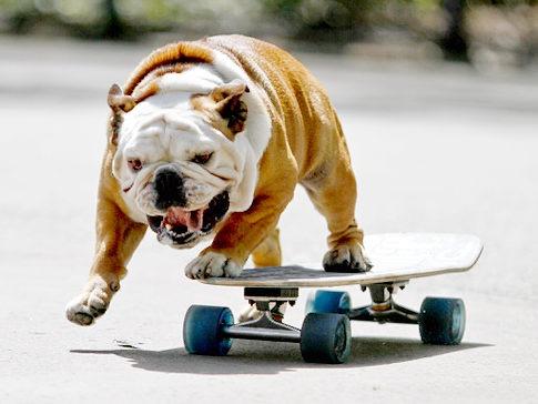 chien-qui-fait-du-skateboard